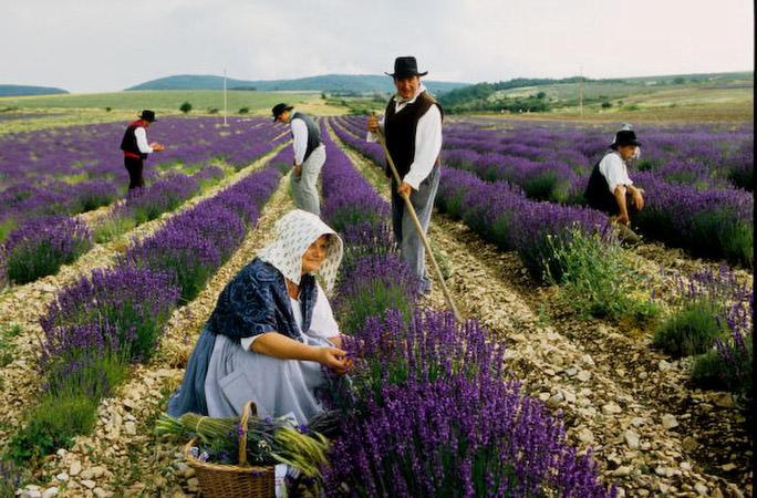 Si la Provence